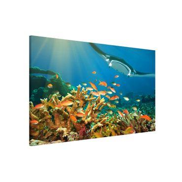 Magnettafel - Korallenriff - Memoboard Quer