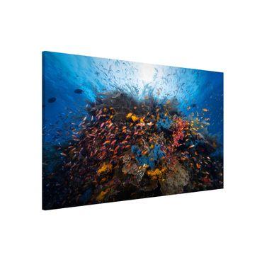 Magnettafel - Lagune mit Fischen - Memoboard Quer