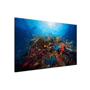 Magnettafel - Lagune Unterwasser - Memoboard Querformat