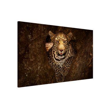 Magnettafel - Leopard ruht auf einem Baum - Memoboard Quer