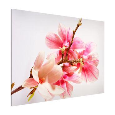 Magnettafel - Magnolienblüten - Memoboard Querformat