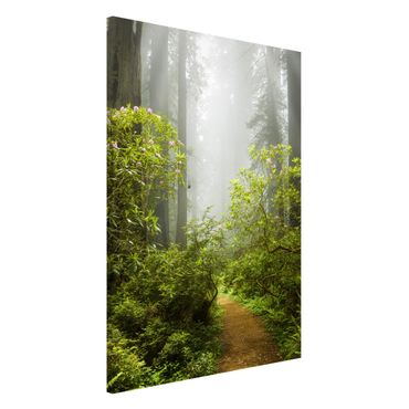 Magnettafel - Nebliger Waldpfad - Memoboard Hochformat
