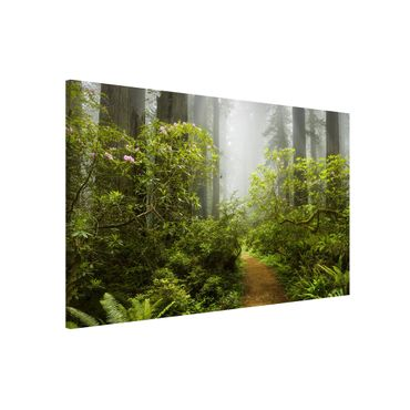 Magnettafel - Nebliger Waldpfad - Memoboard Querformat
