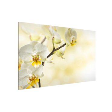 Magnettafel - Orchideen Zweig - Memoboard Querformat