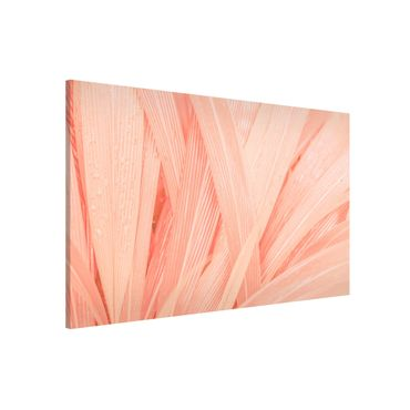 Magnettafel - Palmenblätter Rosa - Memoboard Querformat