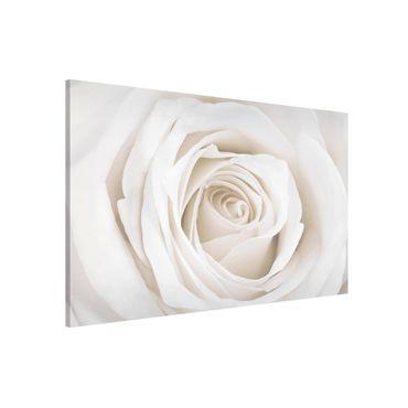 Magnettafel - Pretty White Rose - Memoboard Quer