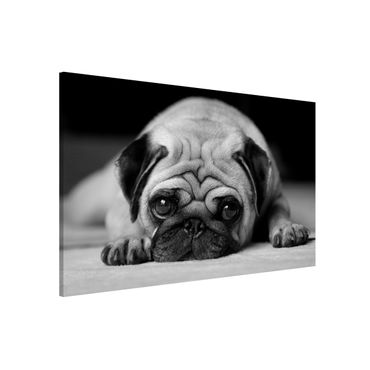 Magnettafel - Pug Loves You II - Memoboard Quer