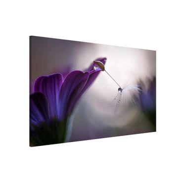 Magnettafel - Purple Rain - Memoboard Querformat