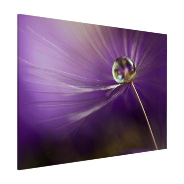 Magnettafel - Pusteblume in Violett - Memoboard Quer