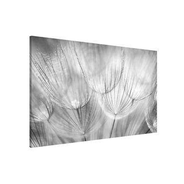 Magnettafel - Pusteblumen Makroaufnahme in schwarz weiß - Memoboard Quer