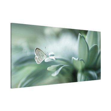 Magnettafel - Schmetterling und Tautropfen in Pastellgrün - Memoboard Panorama Querformat 1:2