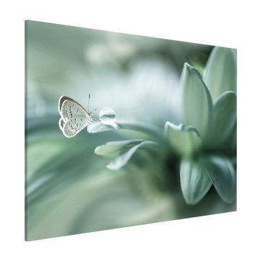 Magnettafel - Schmetterling und Tautropfen in Pastellgrün - Memoboard Querformat 3:4