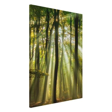 Magnettafel - Sonnentag im Wald - Memoboard Hoch