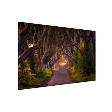 Magnettafel - Tunnel aus Bäumen - Memoboard Quer