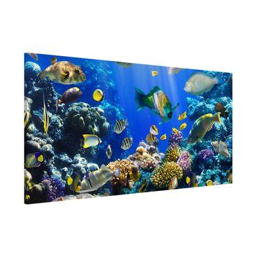 Magnettafel - Underwater Reef - Memoboard Panorama Quer