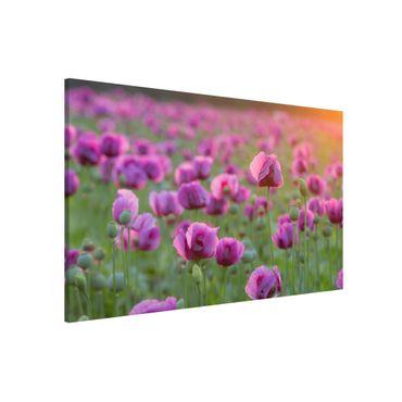 Magnettafel - Violette Schlafmohn Blumenwiese im Frühling - Memoboard Quer