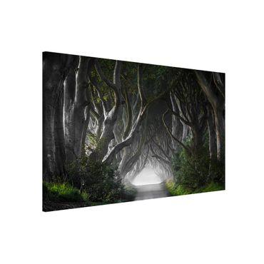 Magnettafel - Wald in Nordirland - Memoboard Quer