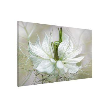 Magnettafel - Weiße Nigella - Memoboard Quer