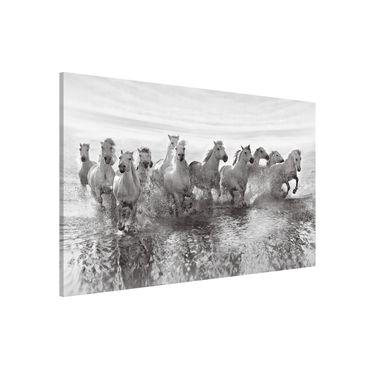 Magnettafel - Weiße Pferde im Meer - Memoboard Quer