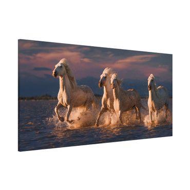 Magnettafel - Wilde Pferde in Kamargue - Memoboard Panorama Querformat 1:2
