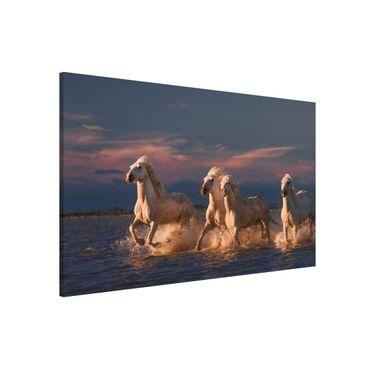Magnettafel - Wilde Pferde in Kamargue - Memoboard Querformat 2:3