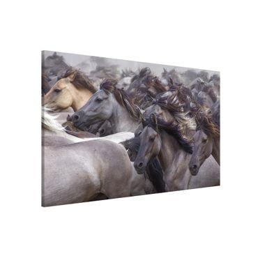 Magnettafel - Wildpferde - Memoboard Quer