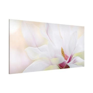 Magnettafel - Zarte Magnolienblüte - Memoboard Panorama Querformat