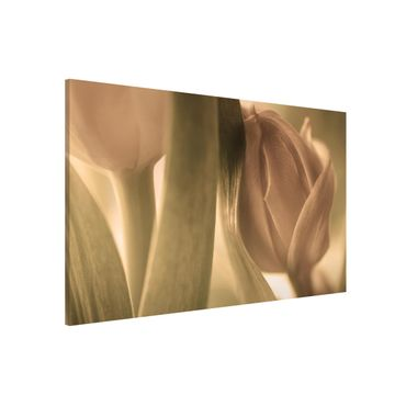 Magnettafel - Zarte Tulpen - Memoboard Quer