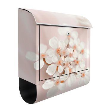 Briefkasten - Miniblüten im Rosanen Licht