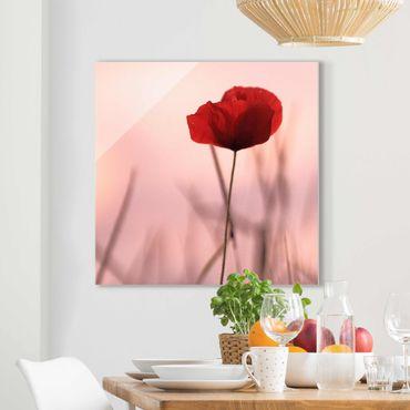 Glasbild - Mohnblüte in der Dämmerung - Quadrat