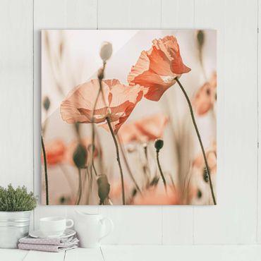 Glasbild - Mohnblüten im Sommerwind - Quadrat