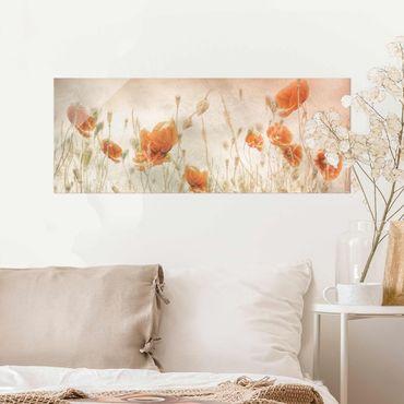 Glasbild - Mohnblumen und Gräser im Feld - Panorama