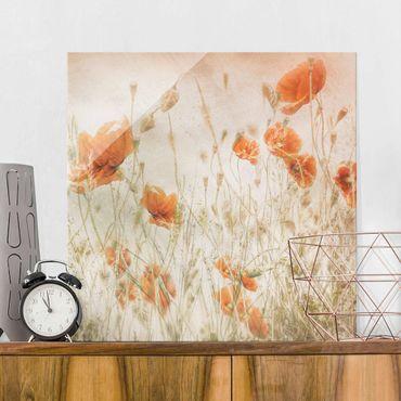 Glasbild - Mohnblumen und Gräser im Feld - Quadrat