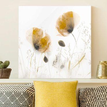 Glasbild - Mohnblumen und zarte Gräser im weichen Nebel - Quadrat