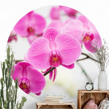 Runde Tapete selbstklebend - Nahaufnahme Orchidee
