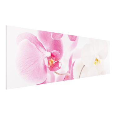 Forexbild - Delicate Orchids
