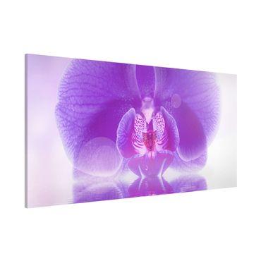 Magnettafel - Lila Orchidee auf Wasser - Blumenbild Memoboard Panorama Quer