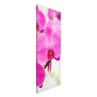 Magnettafel - Nahaufnahme Orchidee - Blumenbild Memoboard Panorama Hoch