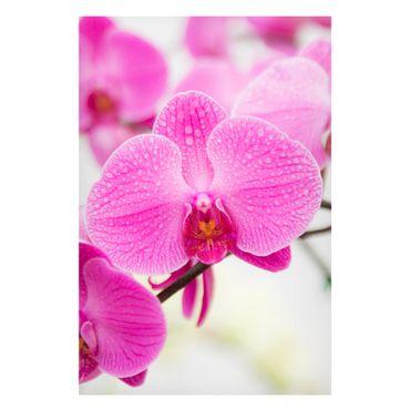Magnettafel - Nahaufnahme Orchidee - Blumenbild Memoboard Panorama Quer