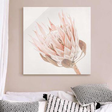 Glasbild - Protea Königin der Blüten - Quadrat