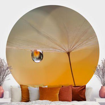 Runde Tapete selbstklebend - Pusteblume in Orange