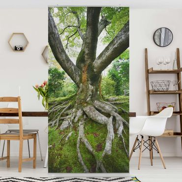 Raumteiler - Alter Baum 250x120cm