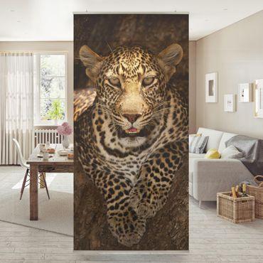 Raumteiler - Leopard Ruht Auf Einem Baum 250x120cm