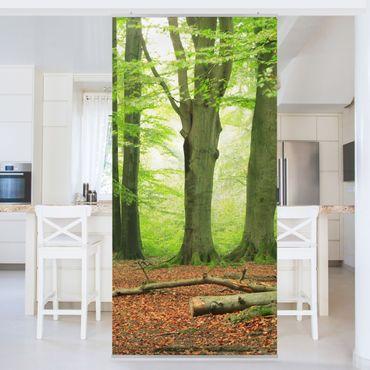 Raumteiler - Mighty Beech Trees 250x120cm