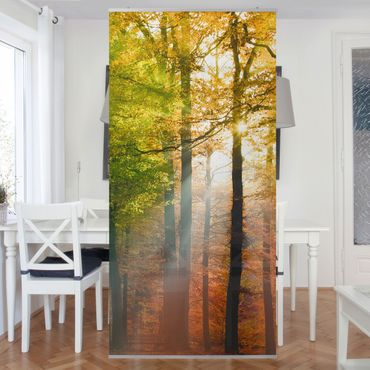 Raumteiler - Morning Light 250x120cm