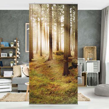 Raumteiler - No.CA48 Morning Forest 250x120cm