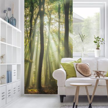 Raumteiler - Sonnentag Im Wald 250x120cm