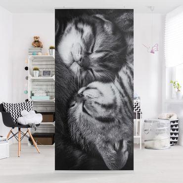 Raumteiler - Zwei Kätzchen 250x120cm