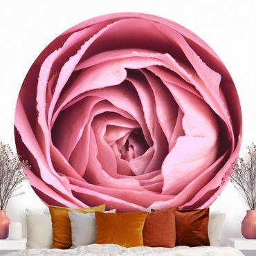 Runde Tapete selbstklebend - Rosa Rosenblüte