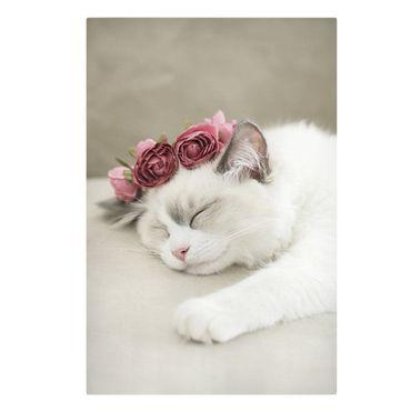 Leinwandbild - Schlafende Katze mit Rosen - Querformat 2:3